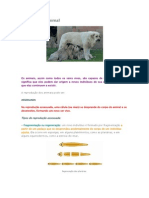 Reprodução dos Animais.docx