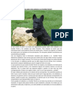 Adiestrar a Un Scottish Terrier