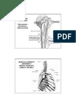 Extra - Miembro Superior - Musculos Inserciones