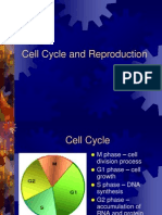 4Cell Cycle and Reproduction