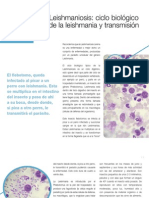 AV_20_16-19_Leishmaniosis ciclo y transmisión