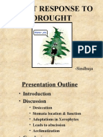 Abiotic stress - Effect of Drought on Plants