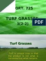 Turf Grasses