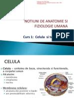 c1 Celula Si Tesuturi Pp
