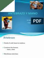 3-antebrazoymano-111005123426-phpapp01