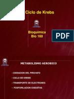 Equemas Clase 7 Ciclo de Krebs