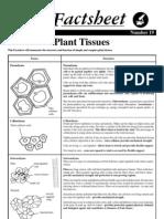 19 Plant Tissues