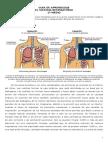GUIA de APRENDIZAJE Biologia Sistema Respiratorio