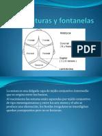 suturasyfontanelas-100518150109-phpapp01