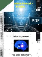 Glándula Pineal y  Fornix - funciones cognitivas II ..