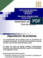 Oxidación de aa y urea.pdf