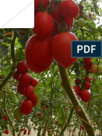 PhytoZyme® Case Study