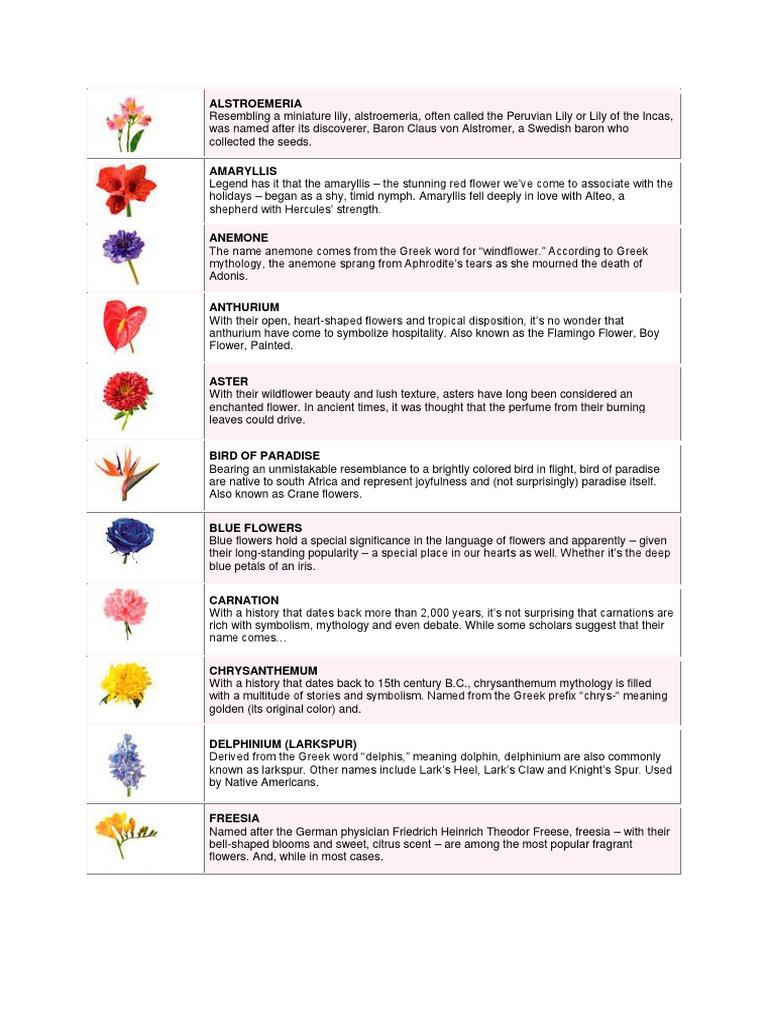 Flowerscx flowers tulip biocorpaavc