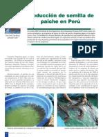 Nro 41 Produccion Semilla de Paiche