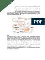 NEUROANATOMIA FUNCIONAL CONCEPTOS.docx