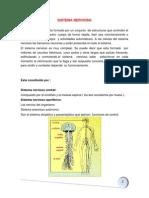 Adulto Sitema Nervioso 1