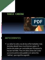 Rabia+Canina+Green