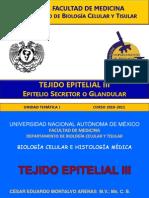 Epitelial 3 Gland