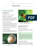 Plagas de paltos y cítricos en Perú