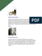 Listado de Razas de Gatos