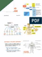 linfoide001