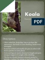 koala powerpoint