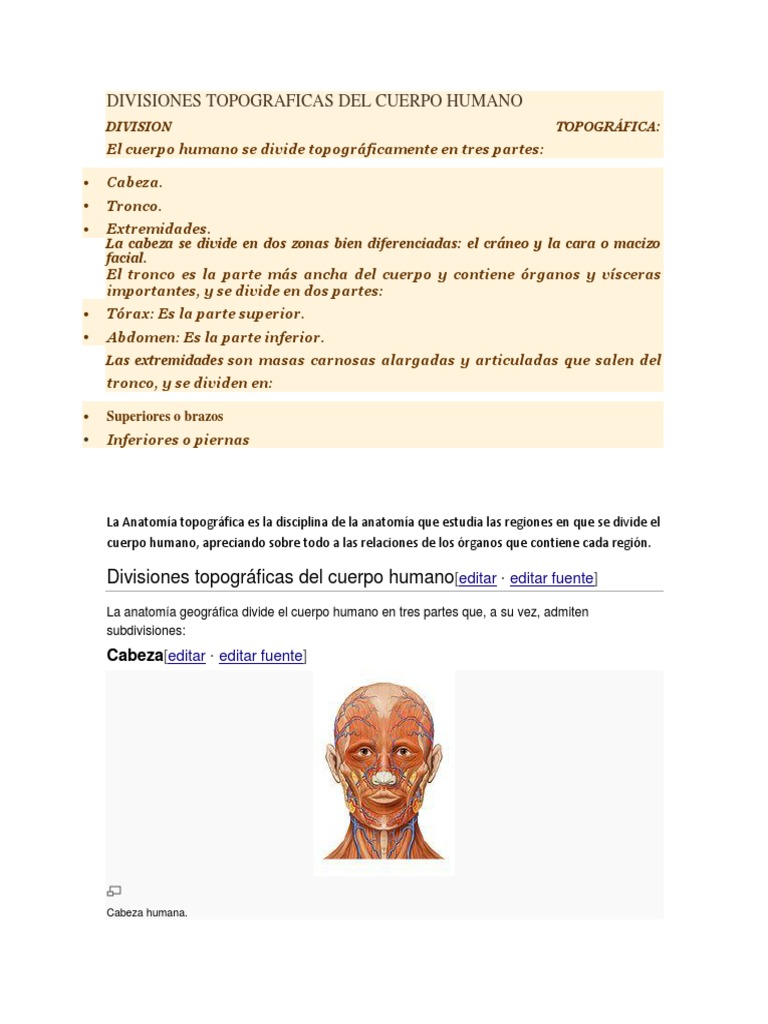 Único Divisiones Del Cuerpo Humano Colección - Imágenes de Anatomía ...
