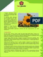 Girasole.pdf