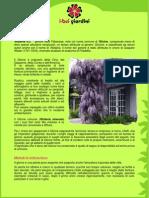 Glicine.pdf