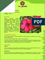 Lino.pdf
