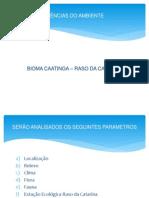 Bioma Caatinga_raso Catarina