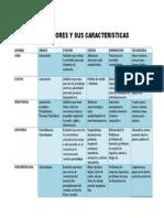 Neurotransmisores y caracteristicas