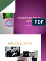 TÉCNICAS EN BIOLOGÍA CELULAR, MICROSCOPIA, COLORACIONES