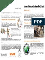 RABIES Leaflet Spanish