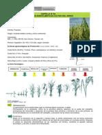 Condiciones Agroclimaticas