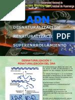 Desnaturalización, Renaturalización y Superenrollamiento