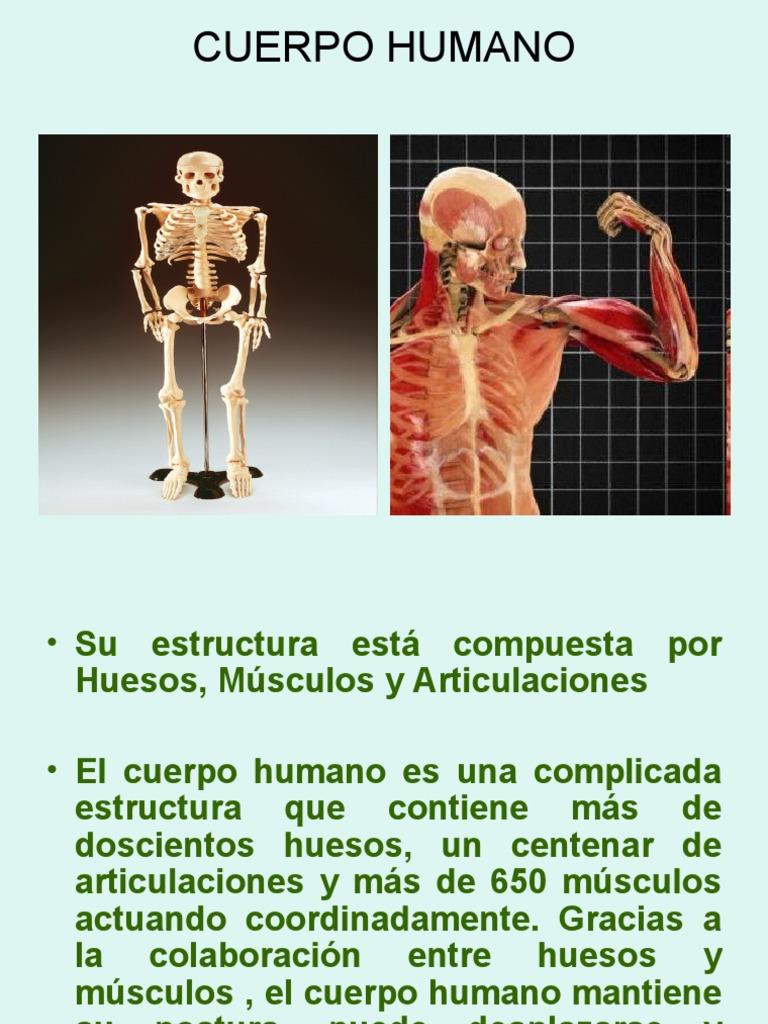 Conociendo Al Cuerpo Humano