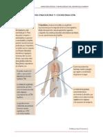 Sistema Endocrino y Su Coordinacion