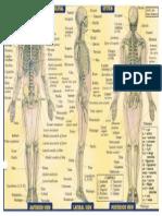 Anatomi Skeletal System