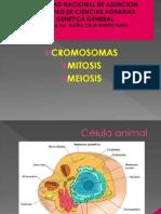 Cromosmas-mitosis y Meiosis