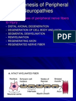 Pathogenesis of Peripheral Nerve Disorder