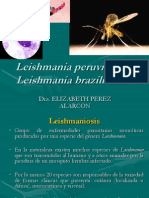 Leishmaniosis-2013 chorrillos