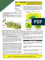 transpiração vegetal resumo