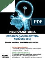 Organização Sistema Nervoso