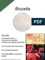 Brucella Y Neisserias
