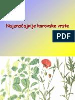 Korovi njivsko bilje