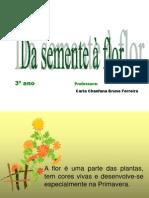 Da Semen Flor