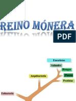REINO MÓNERA.pptx