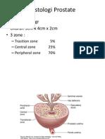 Histologi Prostate