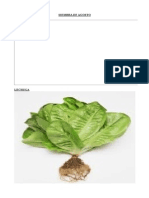 Imagenes Plantas